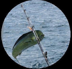 Chartes de pêche